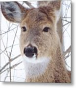 Do You Hear What I Hear? Metal Print by Lori Frisch
