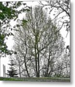Do You See The Walking Tree Metal Print