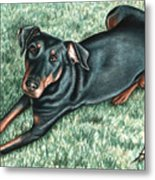 Dobermann Metal Print
