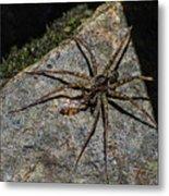 Dock Spider Metal Print