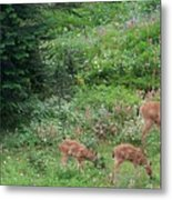Doe And Twin Fawns Metal Print