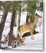 Doe Emerges Metal Print