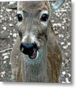 Doe Eyed Deer Talk Metal Print