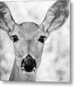 Doe Eyes - Bw Metal Print