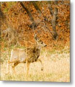 Doe High Stepping On Bald Mountain Metal Print