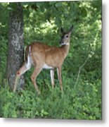 Doe In The Forest Metal Print
