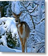 Doe In The Snow In Spokane 2 Metal Print