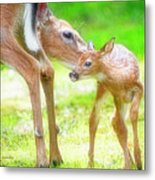 Doe Nuzzles Her Fawn Metal Print