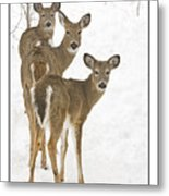 Doe-ray-meh Metal Print