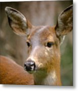 Doe With A Blaze Metal Print