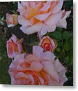 Does Roses Has Thorns Or Does Thorns Has Roses Metal Print
