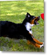 Dog And Red Frisbee Metal Print