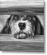 Dog At Gate Metal Print