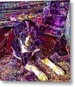 Dog Beautiful Animal Cute Puppy  Metal Print