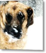 Dog Blizzard - German Shepherd Metal Print