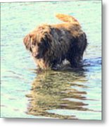 See The Sea Monster Coming Up From The Deep Dark Sea Looking For Something To Eat  Metal Print
