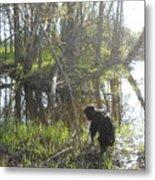 Dog Exploring Mississippi River Bank Metal Print