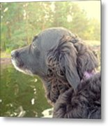 In The Autumn The Dog Looks Back At The Summer   Metal Print
