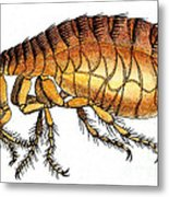 Dog Flea, Illustration Metal Print