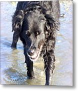 When The Dog Can Finally Cool Down Her Feet She Obviously Enjoys It  Metal Print