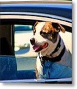 Dog In Car Metal Print