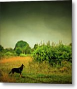 Dog In Chesire England Landscape Metal Print