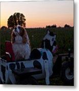 Dog In Cow Wagon  Metal Print