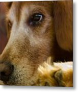 Dog In Thought  Metal Print
