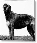Dog: Irish Wolfhound Metal Print
