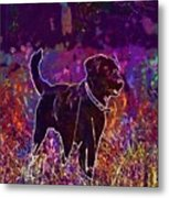 Dog Labrador Animal Canidae Canine  Metal Print
