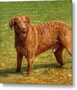 Dog Named Max Metal Print