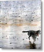 Dog On Beach Metal Print