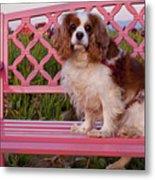 Dog On Pink Bench Metal Print
