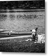 Dog On The Lake #2 Metal Print