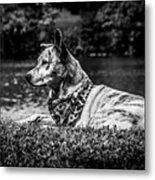 Dog On The Lake Metal Print