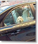 Dog On The Move Metal Print