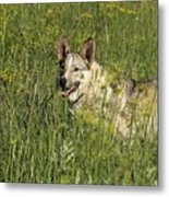 Dog Portrait Metal Print