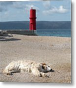 Dog Sleeping On The Beach In Front Of Red Lighthouse Of Cres Metal Print