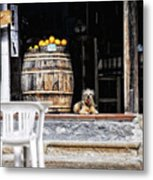 Dog Tavern With Oranges Metal Print