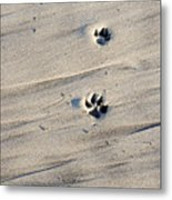 Dog Tracks In The Sand At Carmel Beach Metal Print