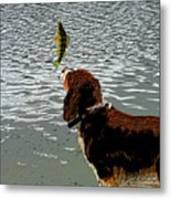 Dog Vs Perch 4 Metal Print