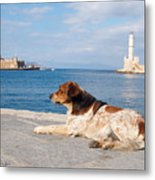 Dog Watch Metal Print