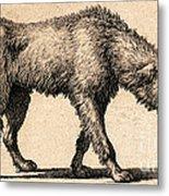 Dog With Rabies, Engraving, 1800 Metal Print