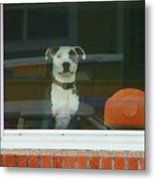 Doggie In The Window Metal Print