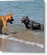 Dogs In Lake Michigan Metal Print