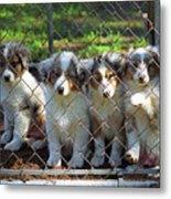 Dogs. Let Us Out #2 Metal Print