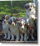 Dogs. Let Us Out #3 Metal Print
