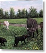Dogs Meeting Bull Metal Print