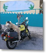 Dogs Rule Metal Print
