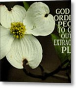 Dogwood Bloom / Flower Metal Print